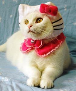 I can imagine this perfect cat costume in a photography studio. Image courtesy of Kittybloger.wordpress.com.